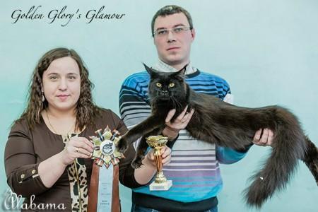 Наша выпускница Гламур в год закрыла титул Международного Чемпиона! Best of Best 2 и 3-WCF ринг на выставке в Нижнекамске! Лучшая кошка в монопородном шоу на выставке в Йошкар- Оле!