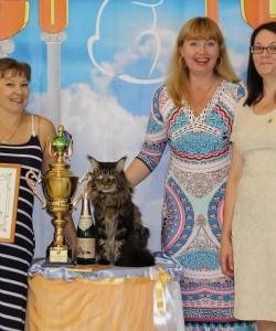 Наш кот Юпитер- Чемпион Мира! Блестящая карьера, множество выставок. экспертиз, побед и закономерный результат!