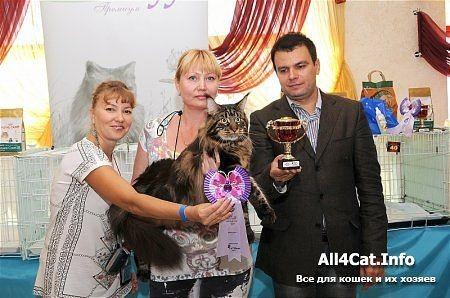 Юпитер лучший кот в своей породе, на выставке в Кирове!!!