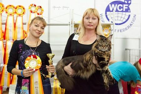 Шоу новости из Тюмени! Юпитер седьмой в десятке сильнейших  животных выставки(150 участников)! Nom BIS и отличные оценки судей!