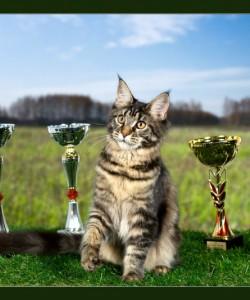 Наши результаты на выставке ICU в Омске: Иветт -лучшая в своей породе(BEST IN BREED), лучший котенок выставки(SHOW WINNER KITTEN),Юпитер закрыл титул Международного Чемпиона, Холли вышла в 4-ре финала из 6-ти!!!