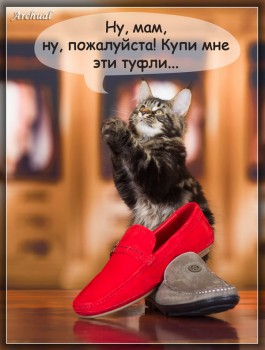 Помет Р  родились  25. 10. 2014  (UNICUM UPITER & Primecoon New Look)