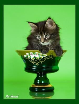 Почему котёнок стоит дорого?