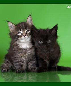 Первая фотосессия котят!