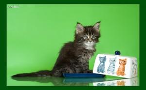 Почему котенок стоит cтолько денег?