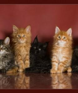 Фото сессия наших котят в 1,5 месяца!